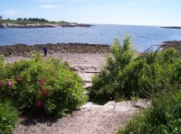 Maine hiking trail on the shoreline